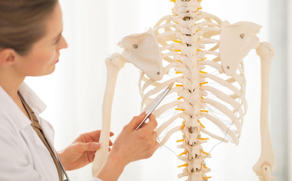 El esqueleto nuestro de cada día